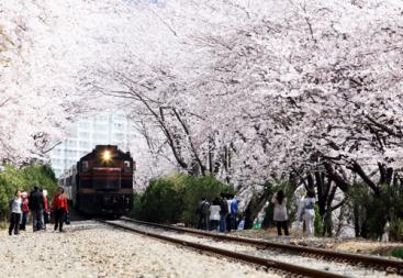 韓国で楽しめる春だけのイベントは何?