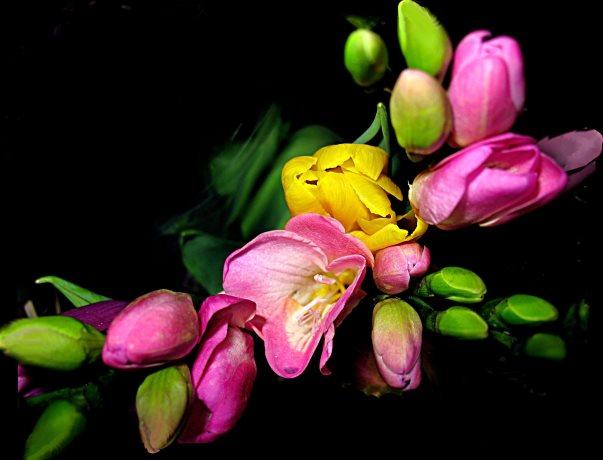 フラワーアレンジメントと生け花の違い、言えますか?