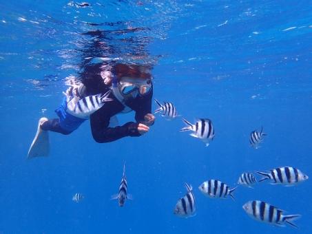 沖縄の海、シュノーケリングの意外な落とし穴。注意すべき可愛い生き物は?
