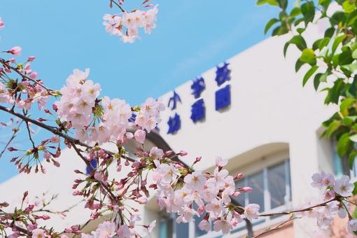 4月の疑問。新学期、入学式はなぜ4月? 4月1日生まれはなぜ早生まれ?