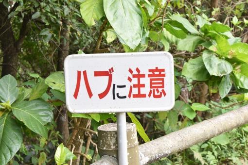 沖縄でハブに遭遇!噛まれないためには?そして、もし噛まれてしまったら?
