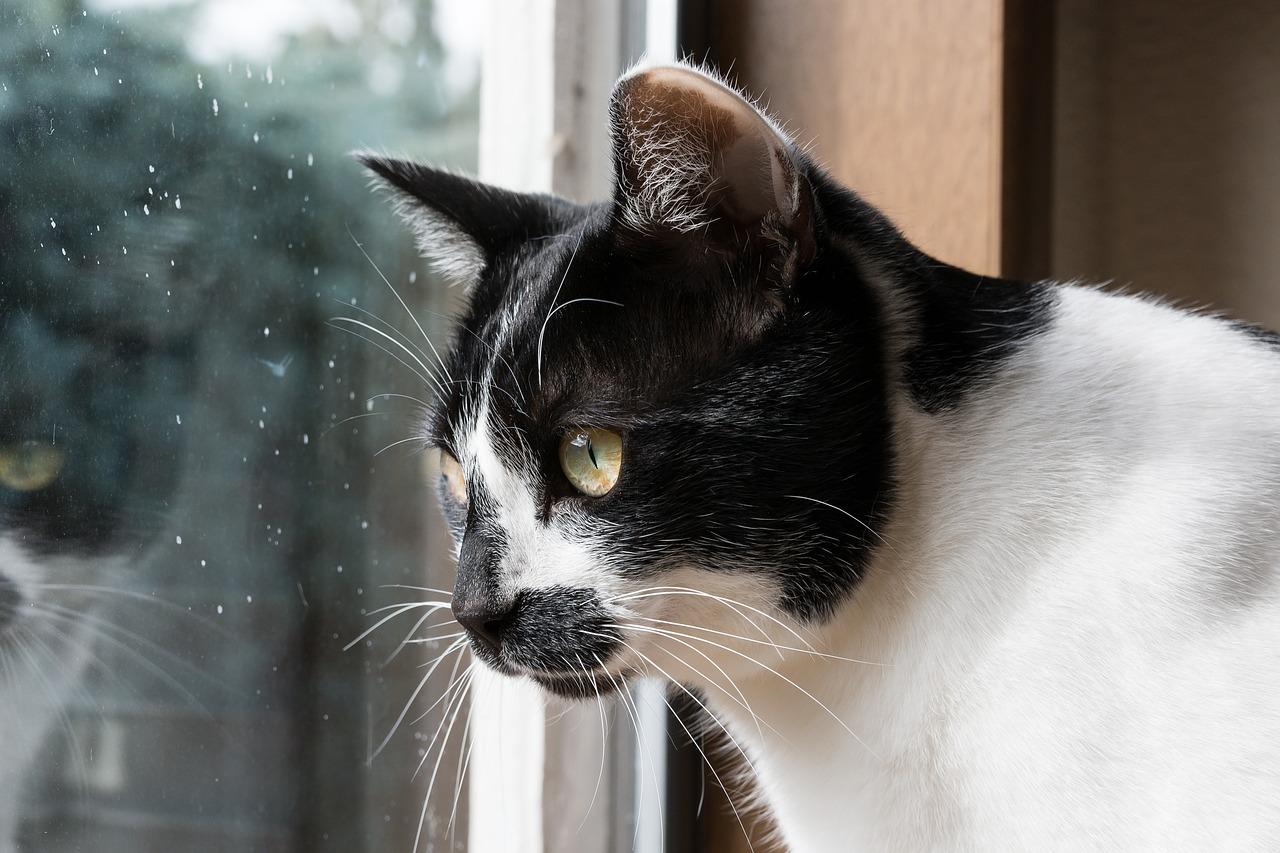 猫をワンルームで室内飼いしたいあなたへ!猫を飼うときの疑問とは?
