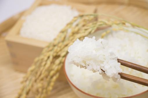 「稲」に生るのが「米」、「米」を炊くと「ご飯」、なんで全部呼び名が違うんでしょう。